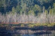 Végétation, bord du lac de Cap-Seize
