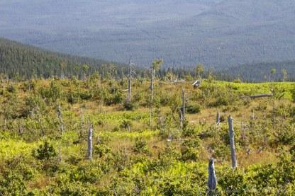 Paysage au mont Ernest la force, parc de la Gaspésie
