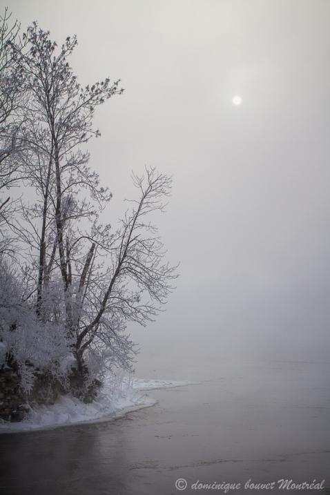matin hiver, brouillard givrant