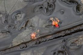 Fleurs d'érable rouge aux bains, photo au 70/200 plus bague Kenko
