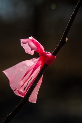 Pour se souvenir des moments roses