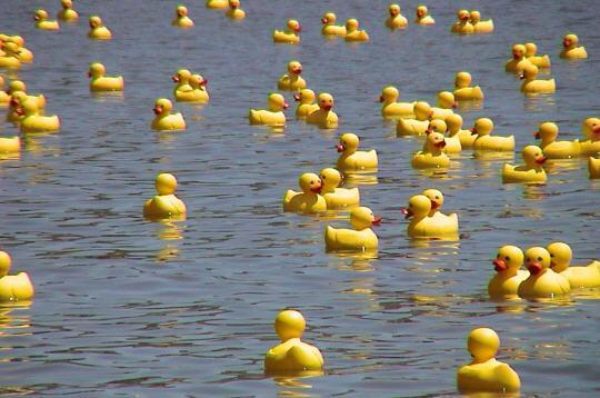 La-course-des-canards