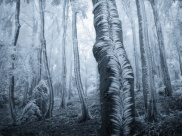 arbres-givres-cest-fou