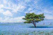 blue-universe-japon4